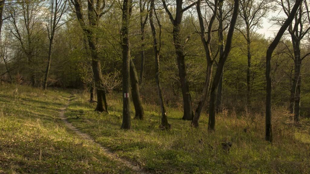 trasylvania bike trails