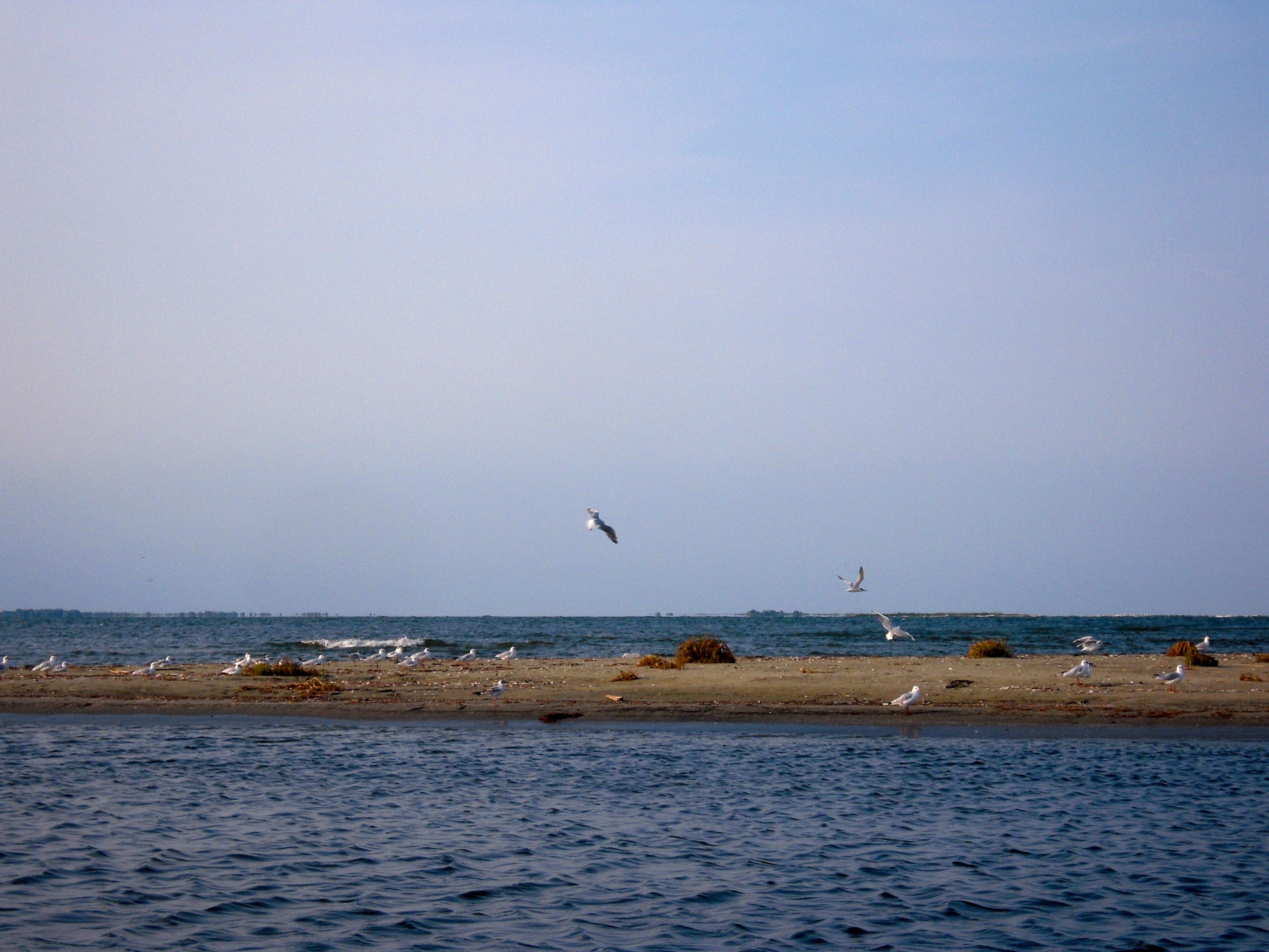 birds island danube delta