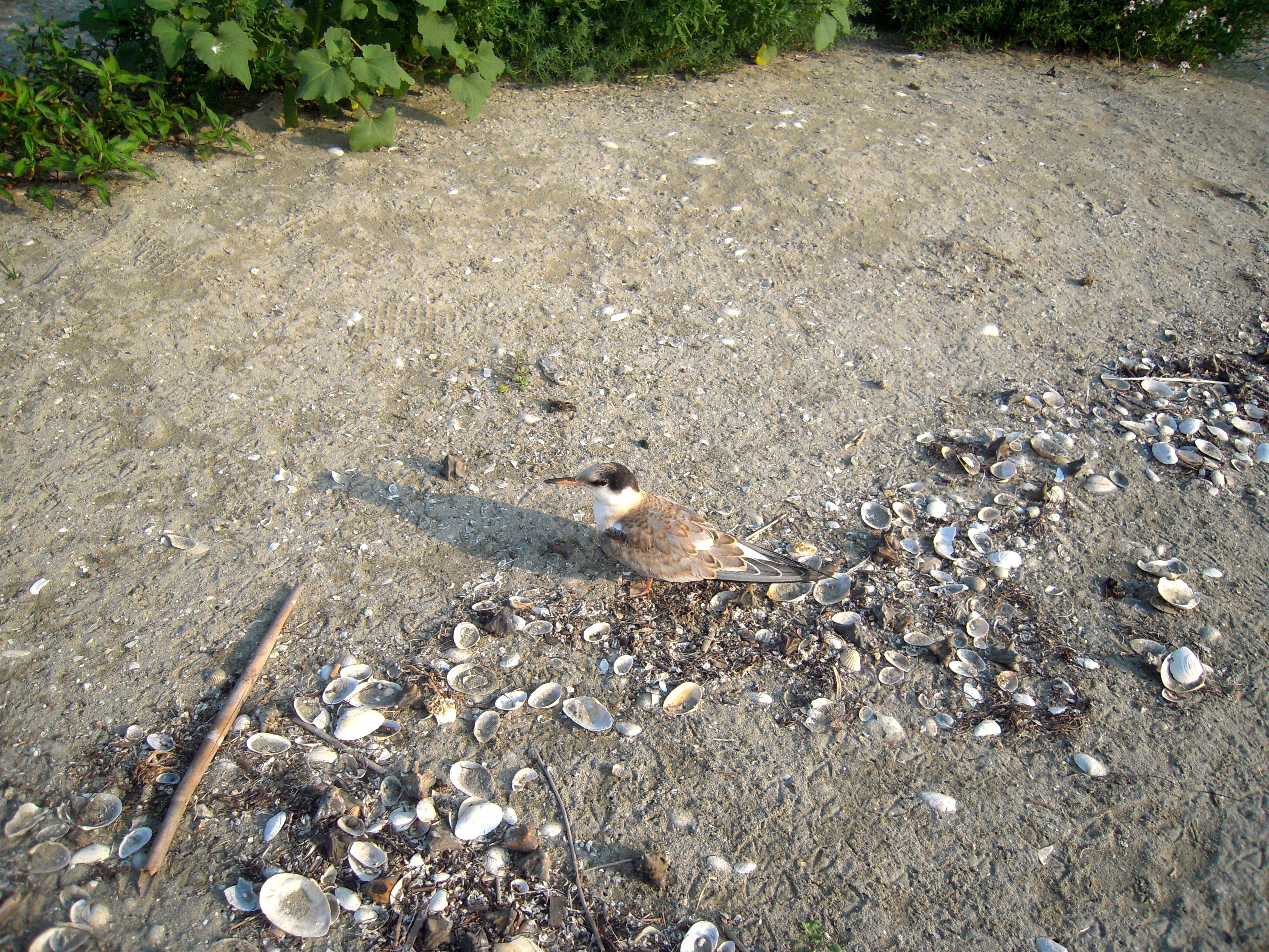 bird danube delta romania