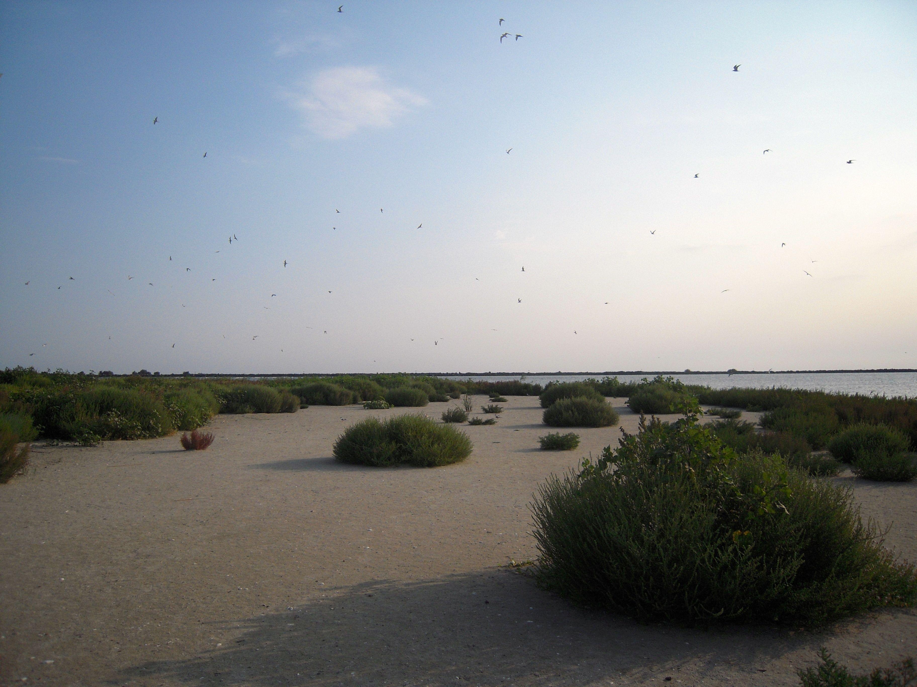 birds island danube delta romania